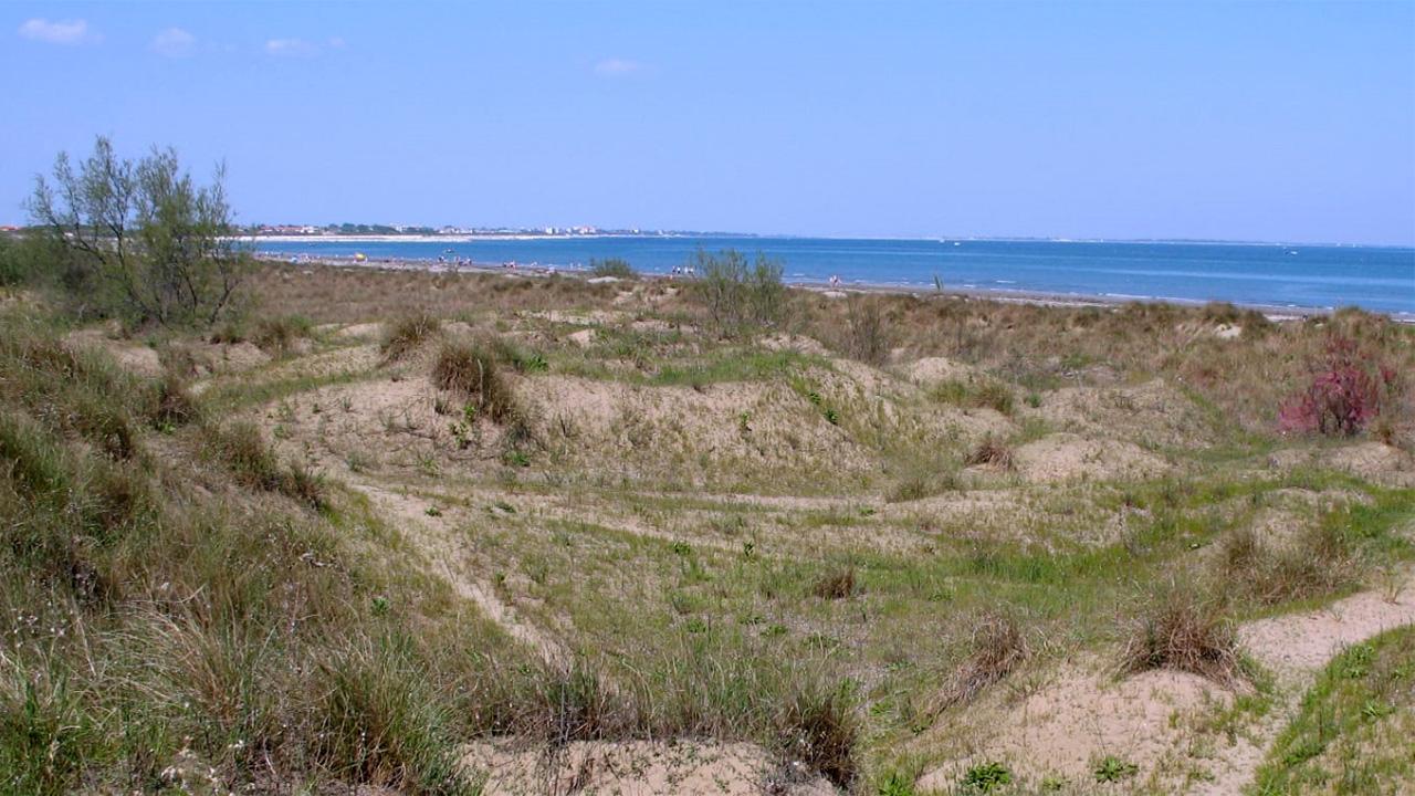 Dune Alberoni